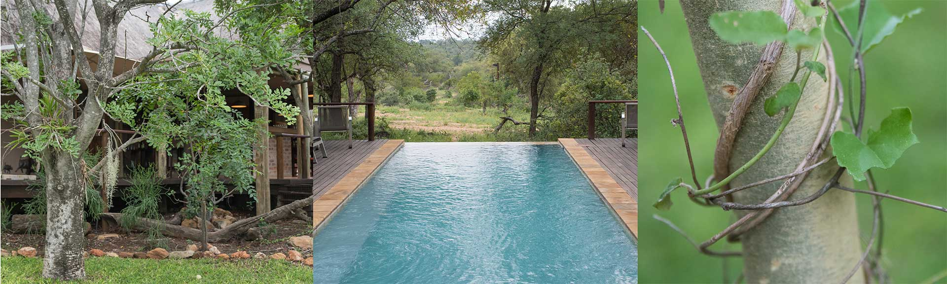 Wildlife Lodge south africa