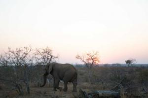 Wildlife Lodge south africa - Toroyaka Bush Lodge